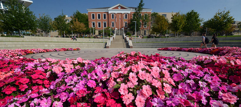 Closeup of pink flowers encircling the labyrinth on campus with a building in the background