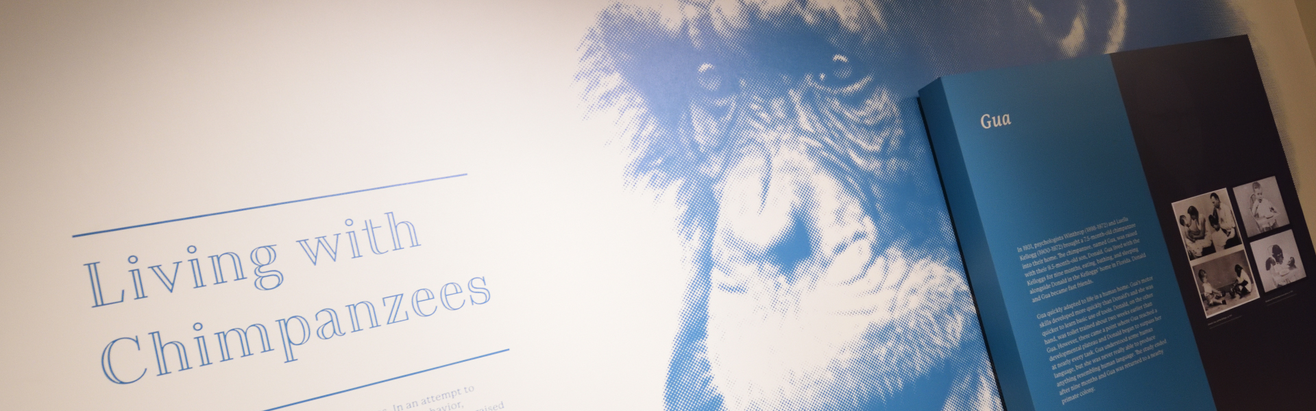 museum display titled Living With Chimpanzees