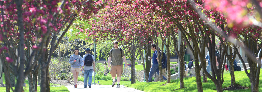 Students walking on a sidewalk, surrounded by flowering trees