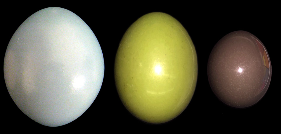 Eggs | Research at The University of Akron