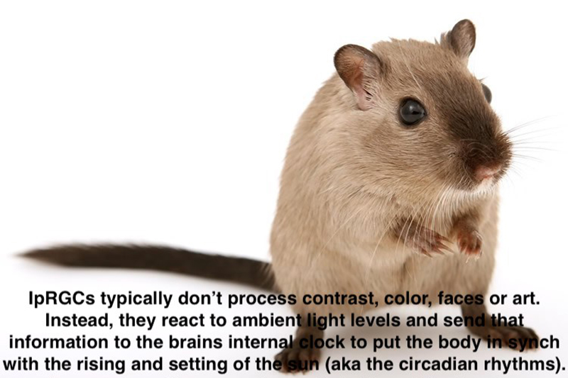 mouse-color-vision-neurosiencenews
